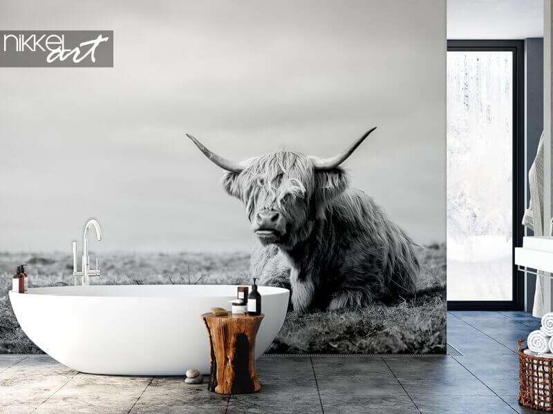 Fototapete mit schottischen Hochlandrind für jedes Interieur