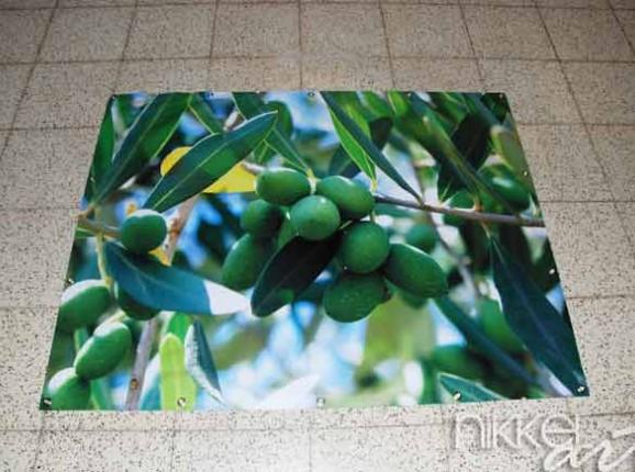 Foto auf Gartenposter Olivenbaum