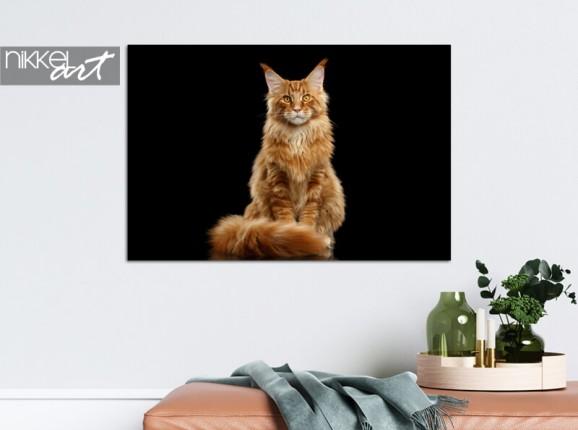Foto Ihrer Katze auf Alu-Dibond