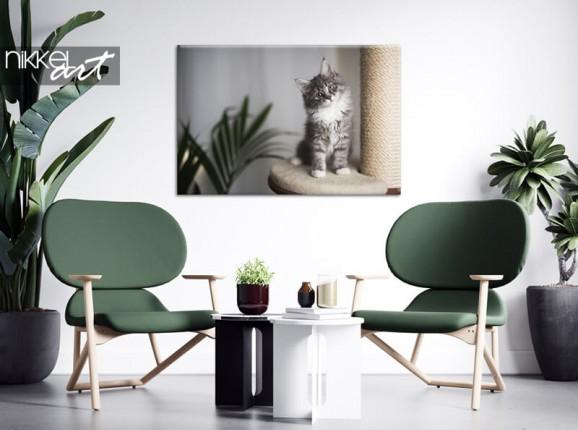 Foto  Katze auf Leinwand