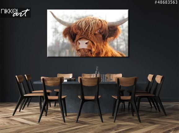 Foto auf Leinwand Schottische Rinder