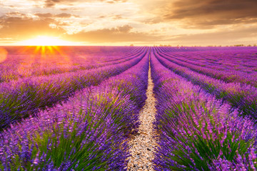 Lavender fields in Valensole, France