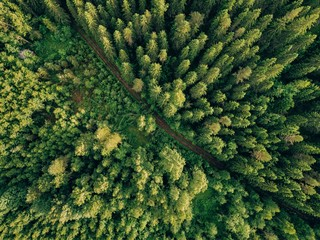 Aerial top view of summer green trees and road in forest in rural Finland.